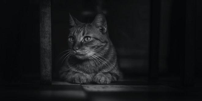 Çirkin Kedi